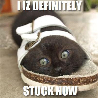 definitely stuck cat