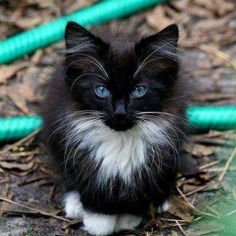 super pretty kitten