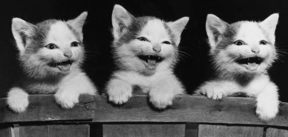 3 kittens bw