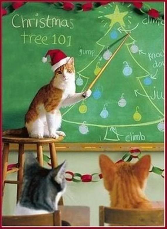 Christmas tree climbing