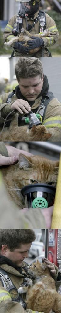 Fireman saves cat