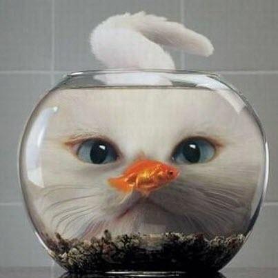 Fishbowl cat