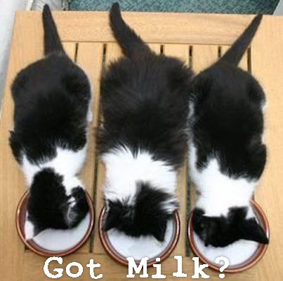 Got milk three cats