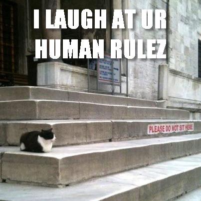 HUMAN RULEZ
