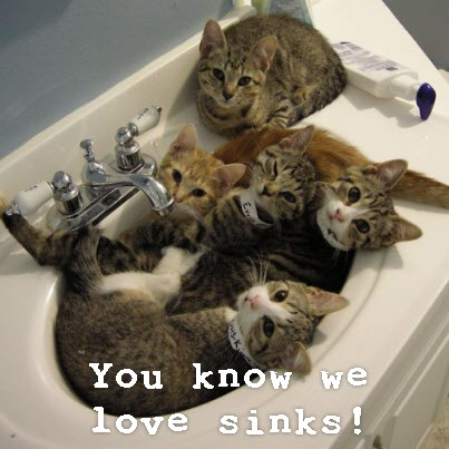 In the sink