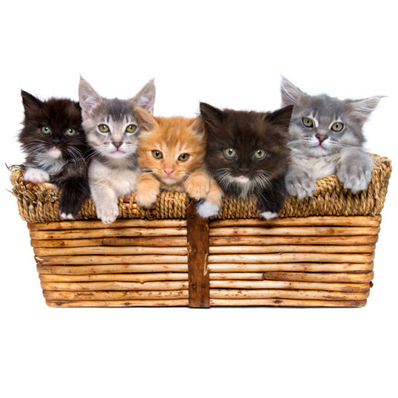 Kittens-in-a-basket