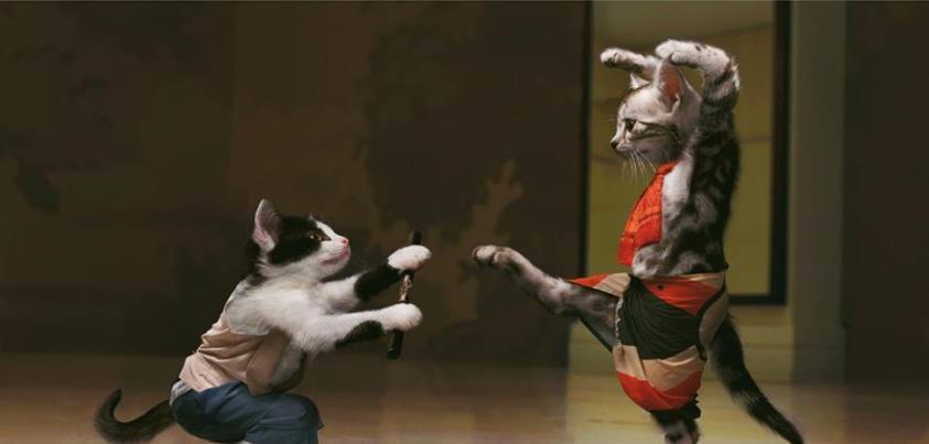 Kung Fu Kitties