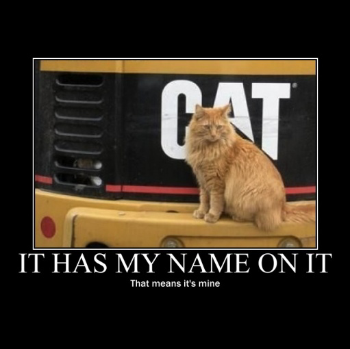 My name is cat