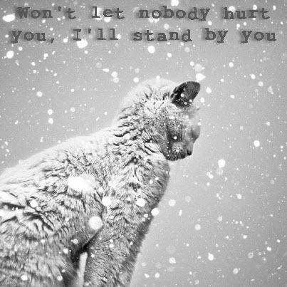 cute cat in the snow