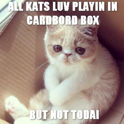 Sad cat in box
