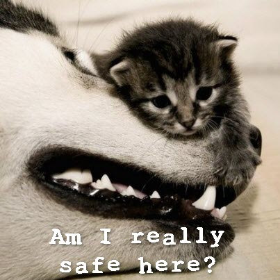 Safe here