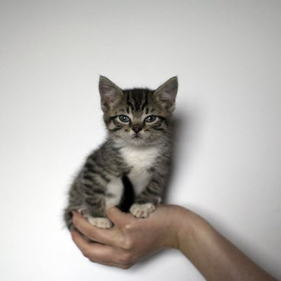 Tiny kitten in hand