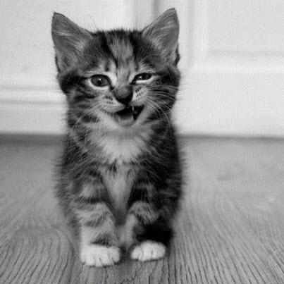 Wink kitten