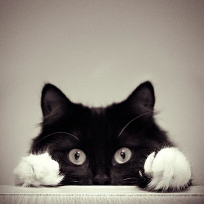 black and white cat peers over table