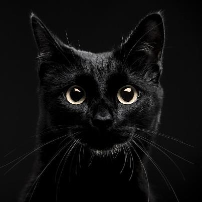 black cat pic