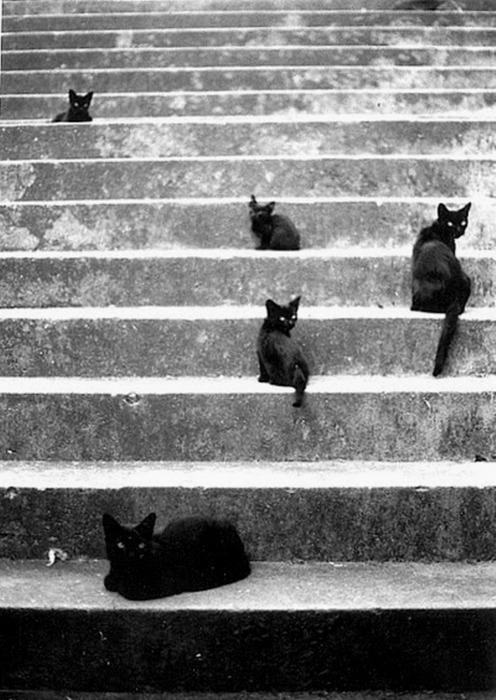 black cats on steps