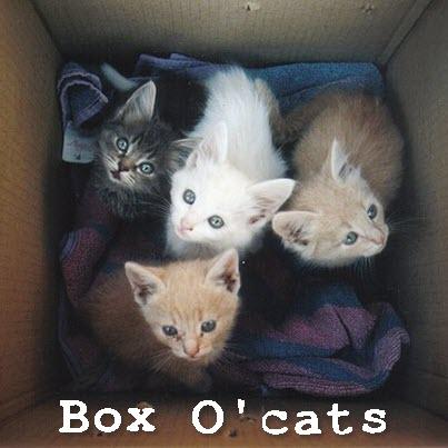 box o cats