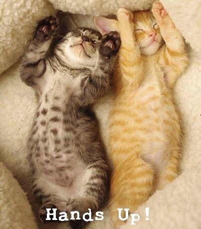 brother kittens asleep