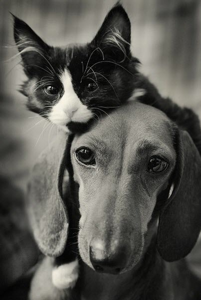 bw cat dog