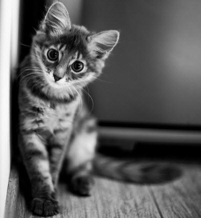 bw kitten cute