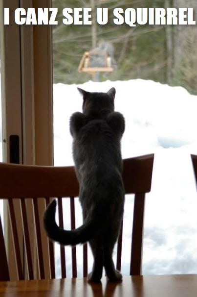 can see squirrel