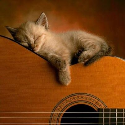cat guitar