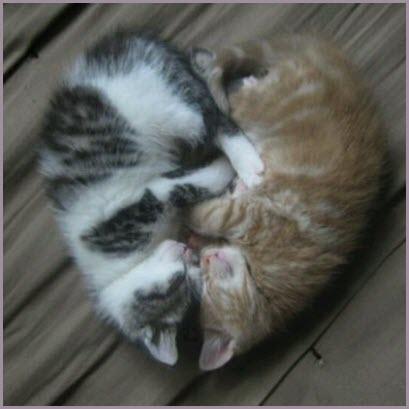 cat heart kittens