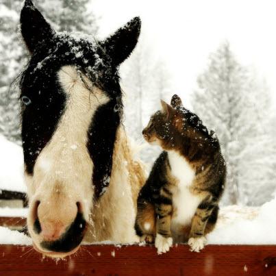 cat horse snow
