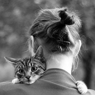 cat hugs lady