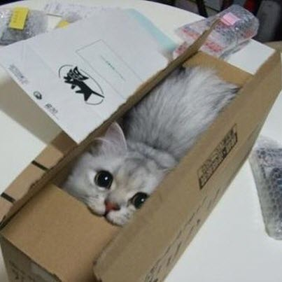 cat in box postage