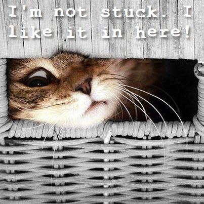 cat in wicker