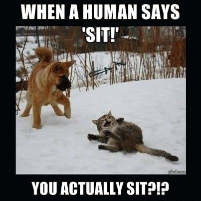 cat laughs at dog