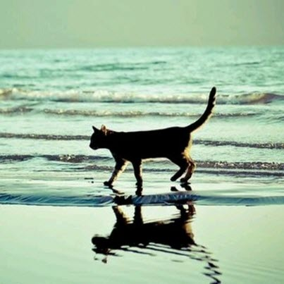 cat on sea shore