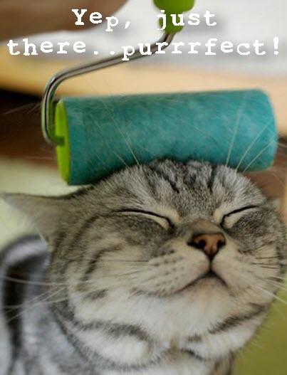 cat paint roller