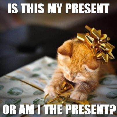 cat play present