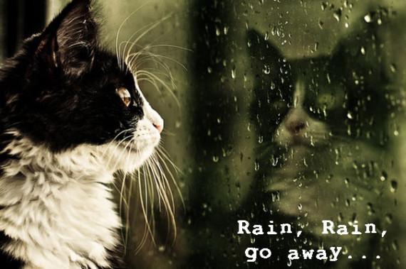 cat reflection stares at rain