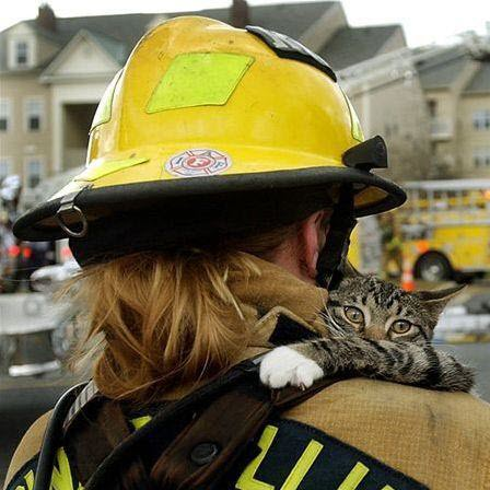 cat rescued by fireman