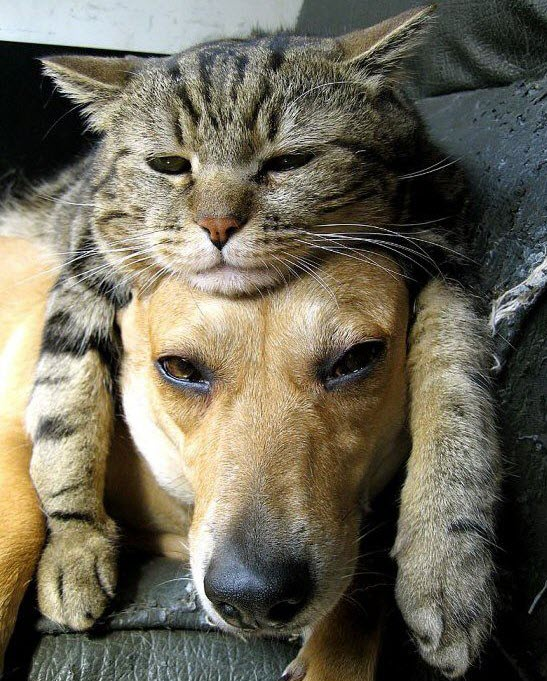 cat sits on dog's head