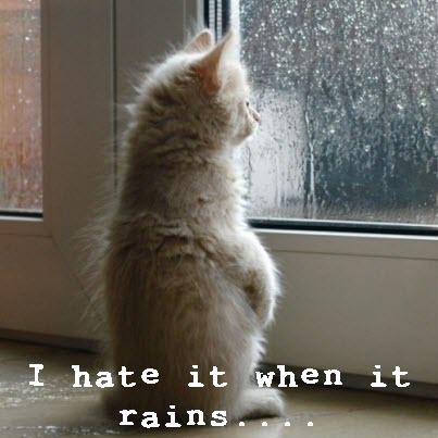 cat stares at rain