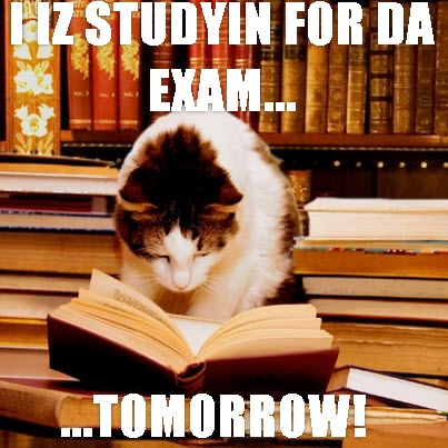 cat studying for exam