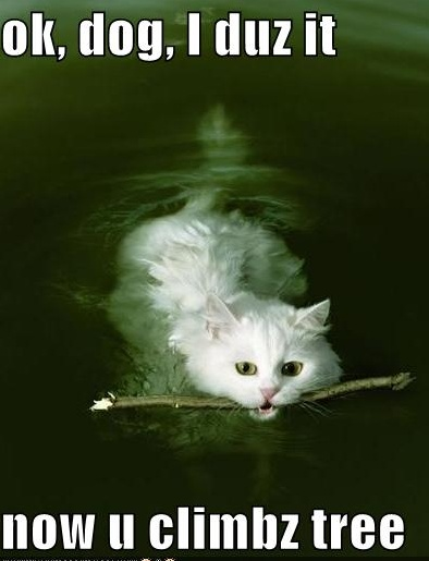 cat swim like dog