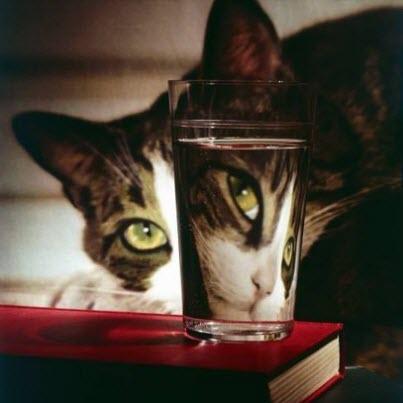 cat through glass