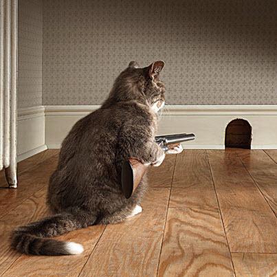 cat with shotgun