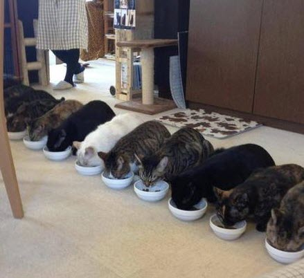 cats eating in a row