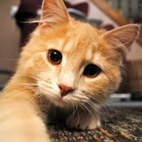 cute cat paw large