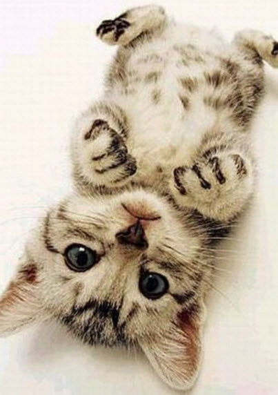 cute upside down kitten