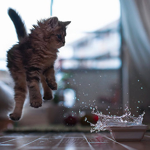 daisy kitten jumps from water