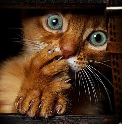 green eyed cat hiding