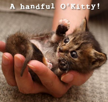 handful o kitty