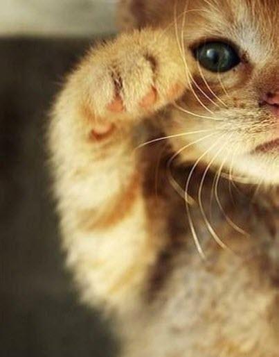 hi cat